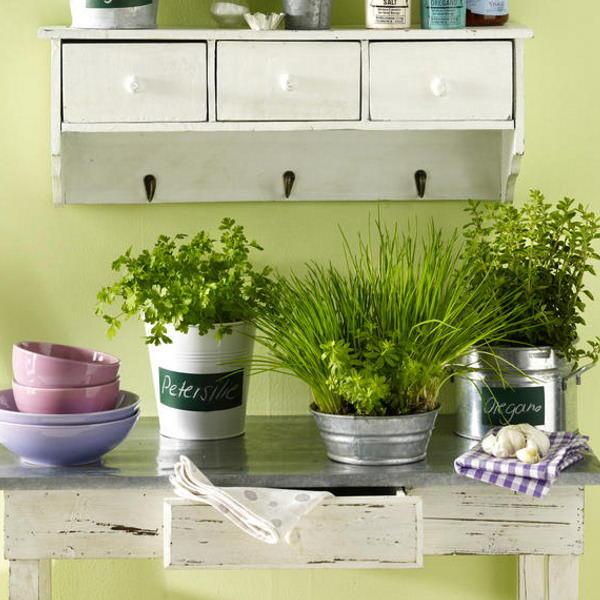 Цветы на кухне создают благоприятный микроклимат