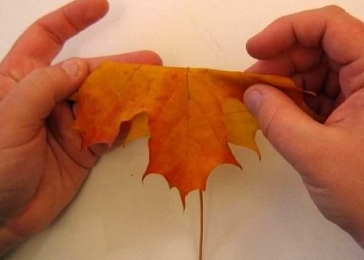 Сгибаете пополам кленовый листок, лицевой стороной наружу