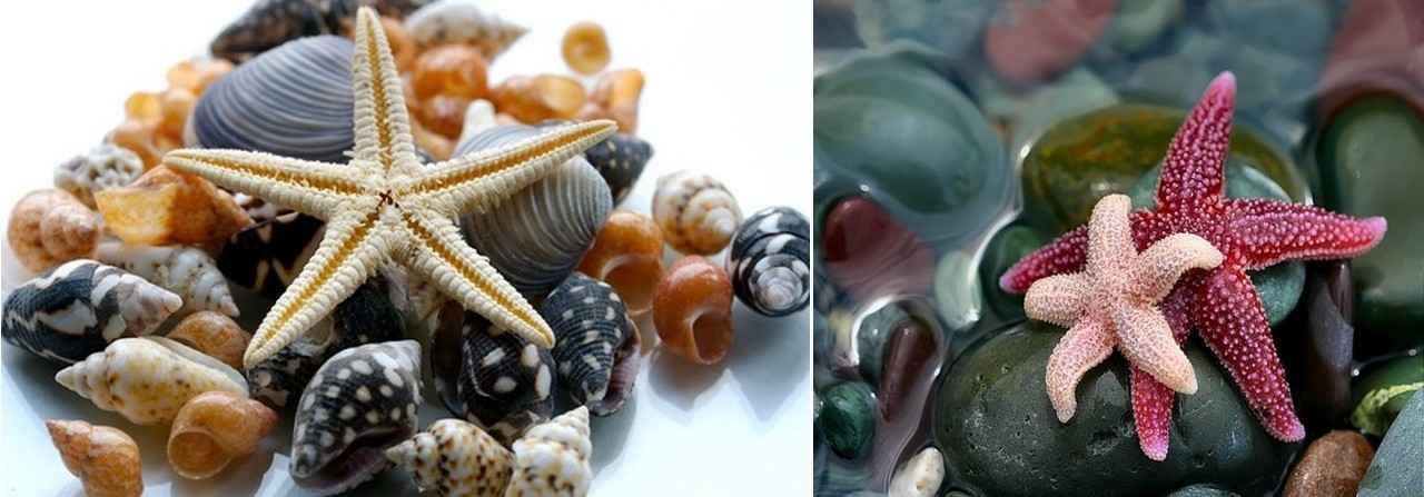 Если вы не можете найти настоящие морские звезды, то можно купить искусственные в магазине
