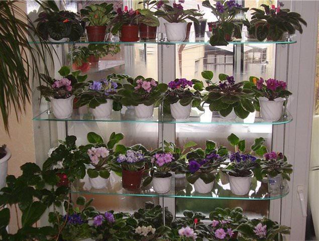 Стеклянная полка - идеальное решение для размещения цветов на окне