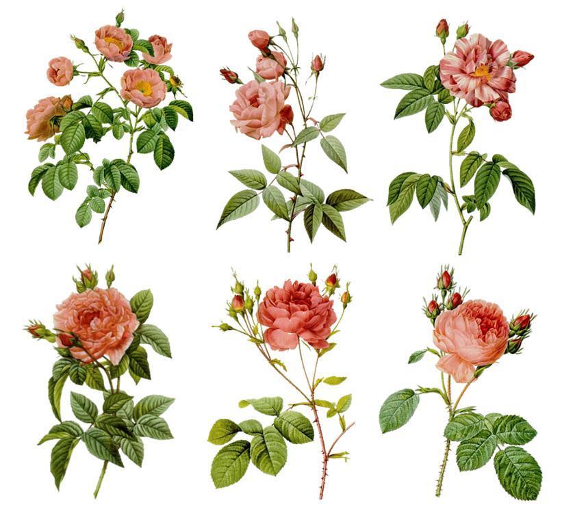 Цветы на белом фоне хорошо подойду для декупажа стеклянной поверхности, например, банки