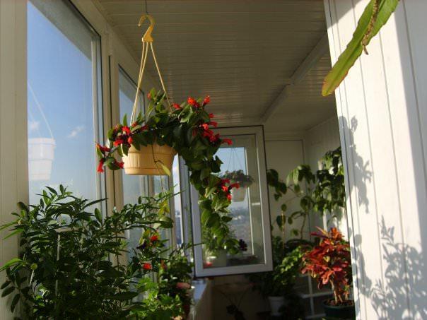 Зимний сад в маленьком балконе? Почему бы нет!