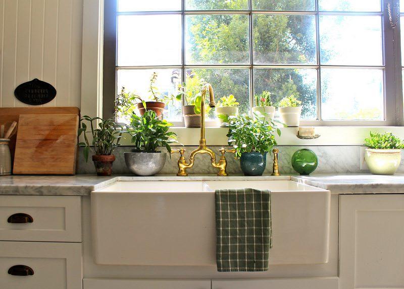 Далеко не каждое растение способно нормально существовать в условиях кухни