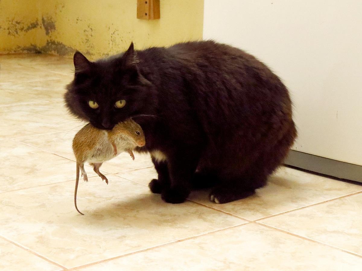 Если вы желаете вывести мышей из дома, то можно завести кота