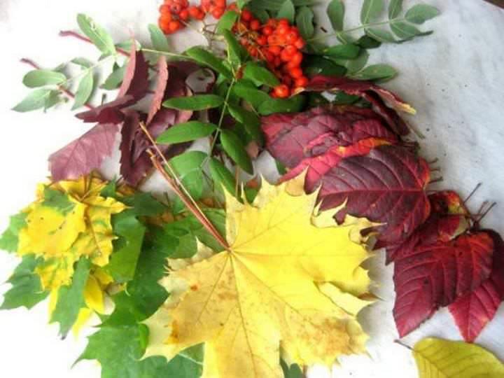 Осенние листья – исключительный декор, который, к сожалению быстро портится. Чтобы предотвратить их преждевременное высыхание, перед использованием материал необходимо обработать