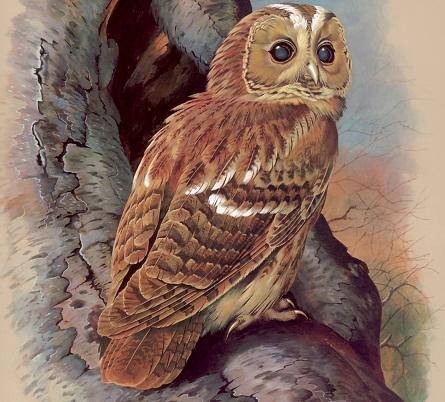 Картинка с изображением совы отлично подходит для декупажа различных предметов: тарелок, банок, керамических плиток