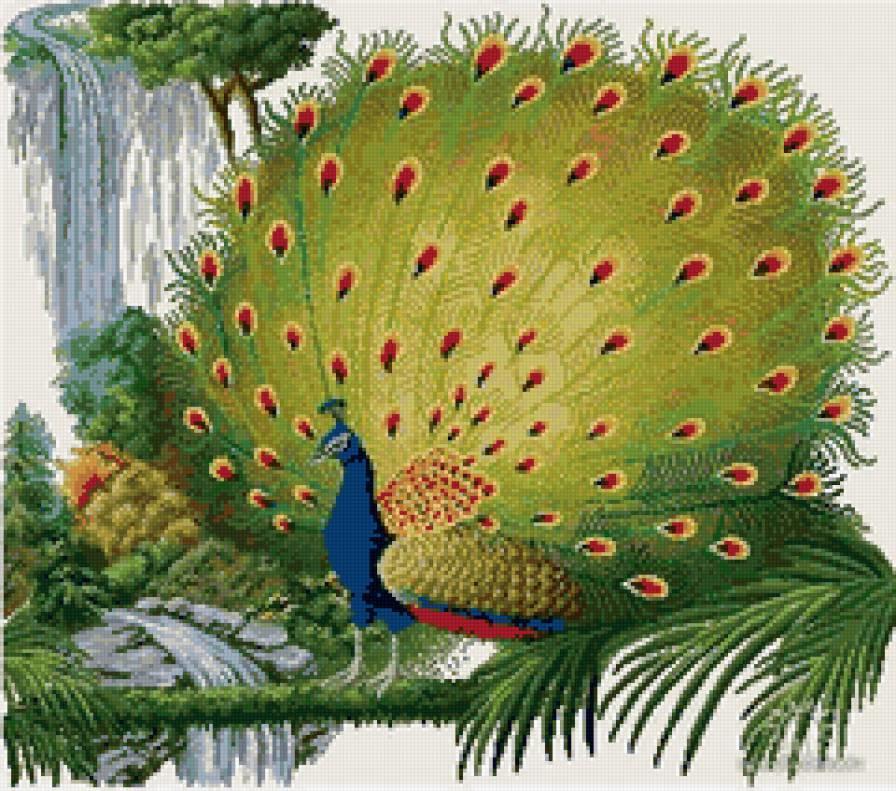 Какую бы схему вы не выбрали, в любом случае вышивка будет смотреться очень красиво, так как роскошь такой птицы не испортить