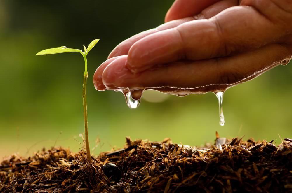 Удобрять бонсай необходимо, потому что питательные вещества в почве вымываются с каждым поливом