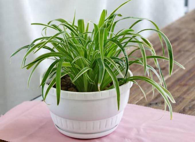 Для кухни больше подходят растения, которым не требуются особые условия содержания