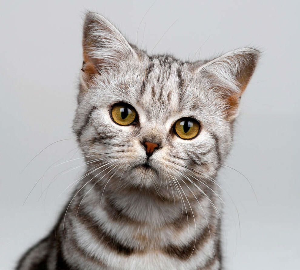 Не стоит лишать кошку всех радостей жизни: она просто следует своим инстинктам, и сама не осознает, что приносит вред