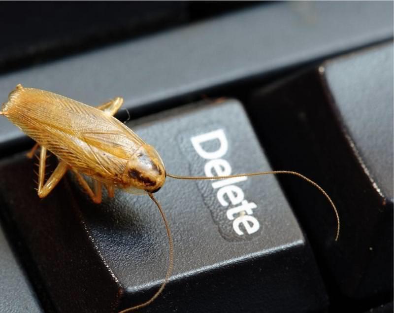 Если не вывести паразитов сразу при обнаружении, они оккупируют со временем всю кухню и избавиться от них будет очень сложно