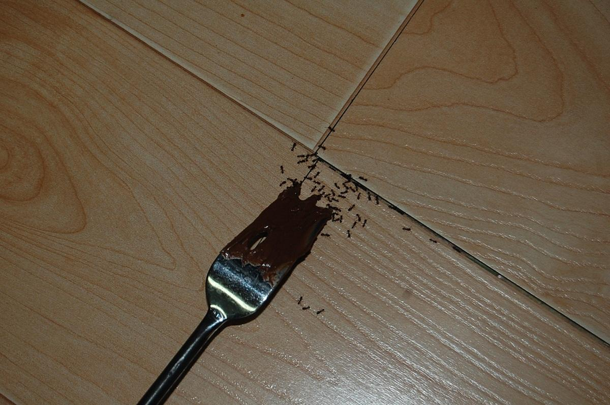 Муравьи в ванной могут завестись в том случае, если где-то на пол упала еда