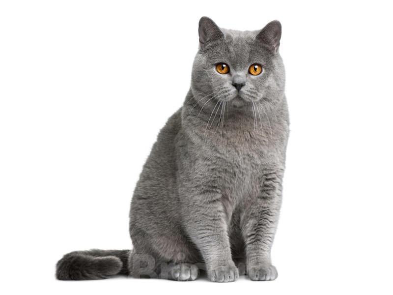 Заставить кошку перестать пакостить может только тот хозяин, который проявляет уважение к своему животному