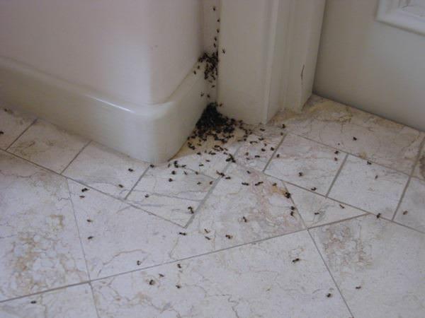 Наклеенная полоса двустороннего скотча перед лазом муравьев избавит вас от их дальнейших посещений