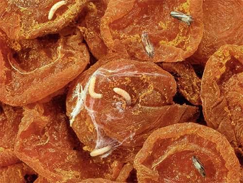 Появление личинок в сыпучих продуктах и гусениц в шкафах – сигнал к действию!