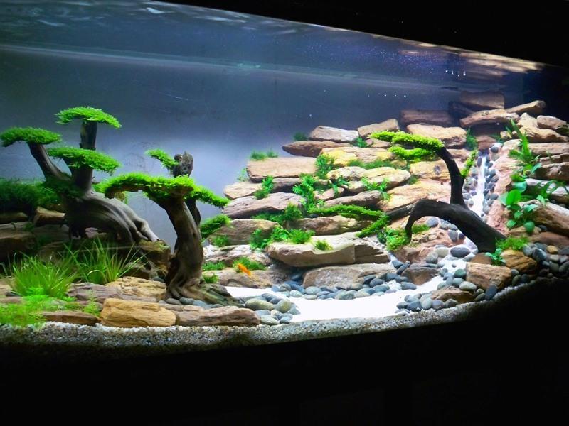Аква-дизайн является современным направлением оформления интерьера. Самый обычный сосуд, наполненный водой, можно сделать произведением искусства.